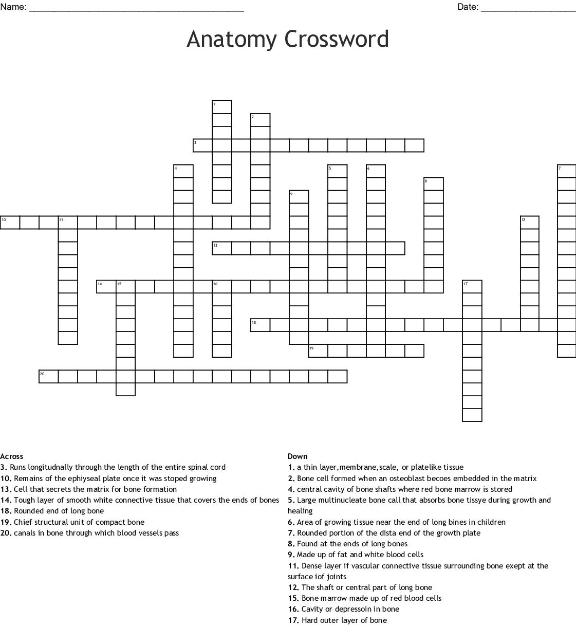 Anatomy Crossword Wordmint