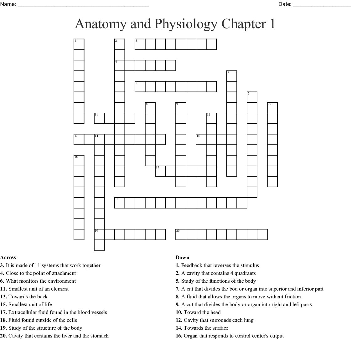 Anatomy and Physiology Chapter 1 Vocab Crossword - WordMint