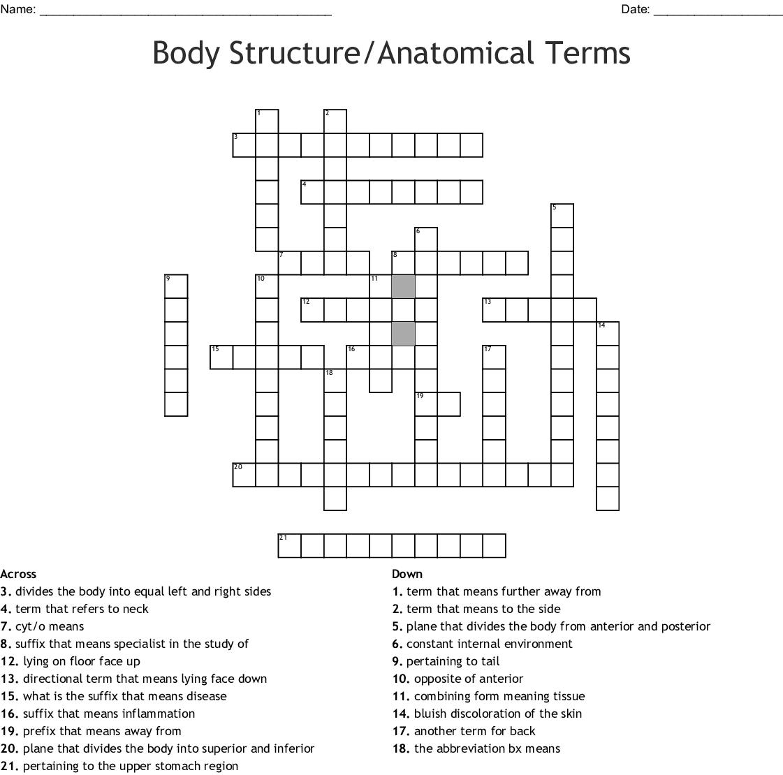 Body Structureanatomical Terms Crossword Wordmint