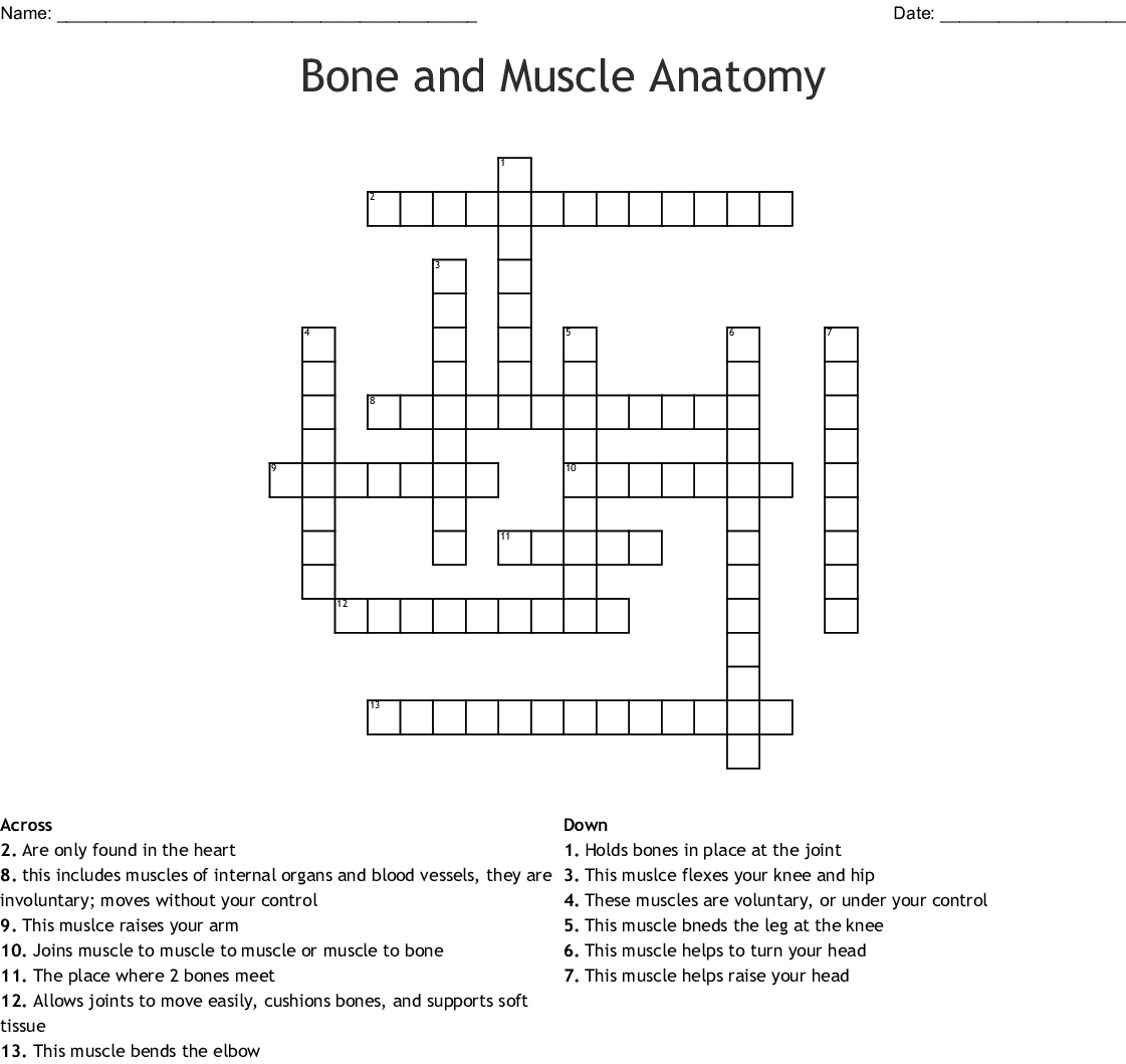Bone And Muscle Anatomy Crossword Wordmint
