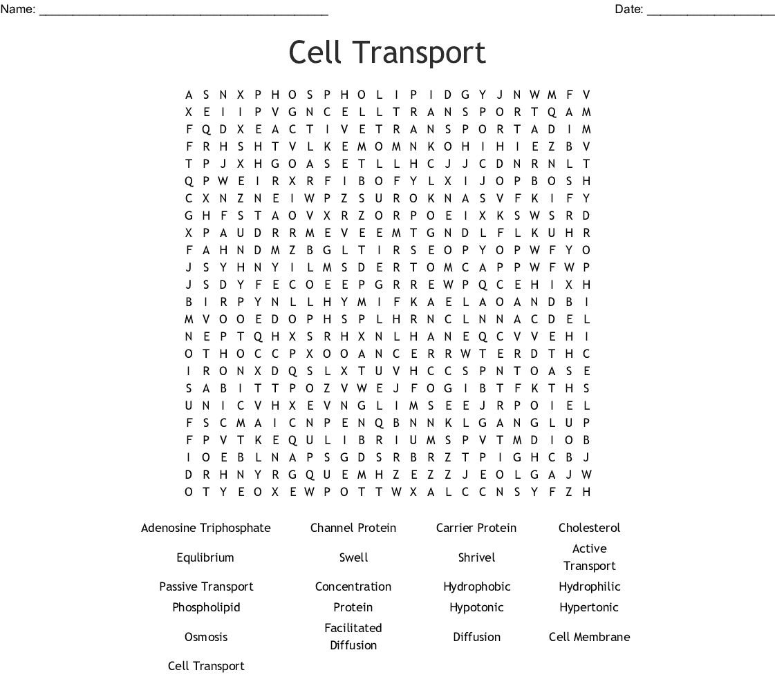 Cell Transport Crossword - WordMint