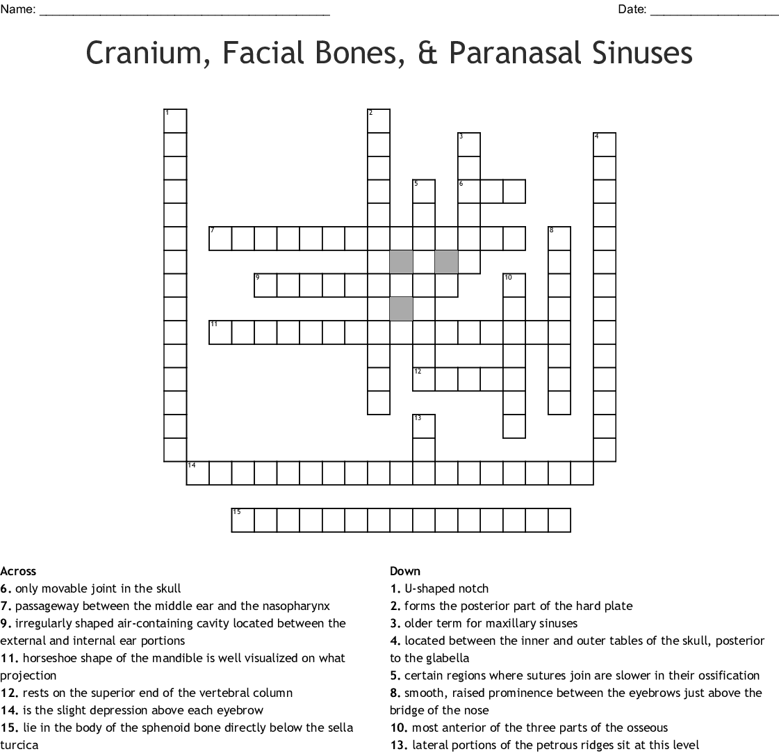 Cranium Facial Bones And Paranasal Sinuses Crossword Wordmint