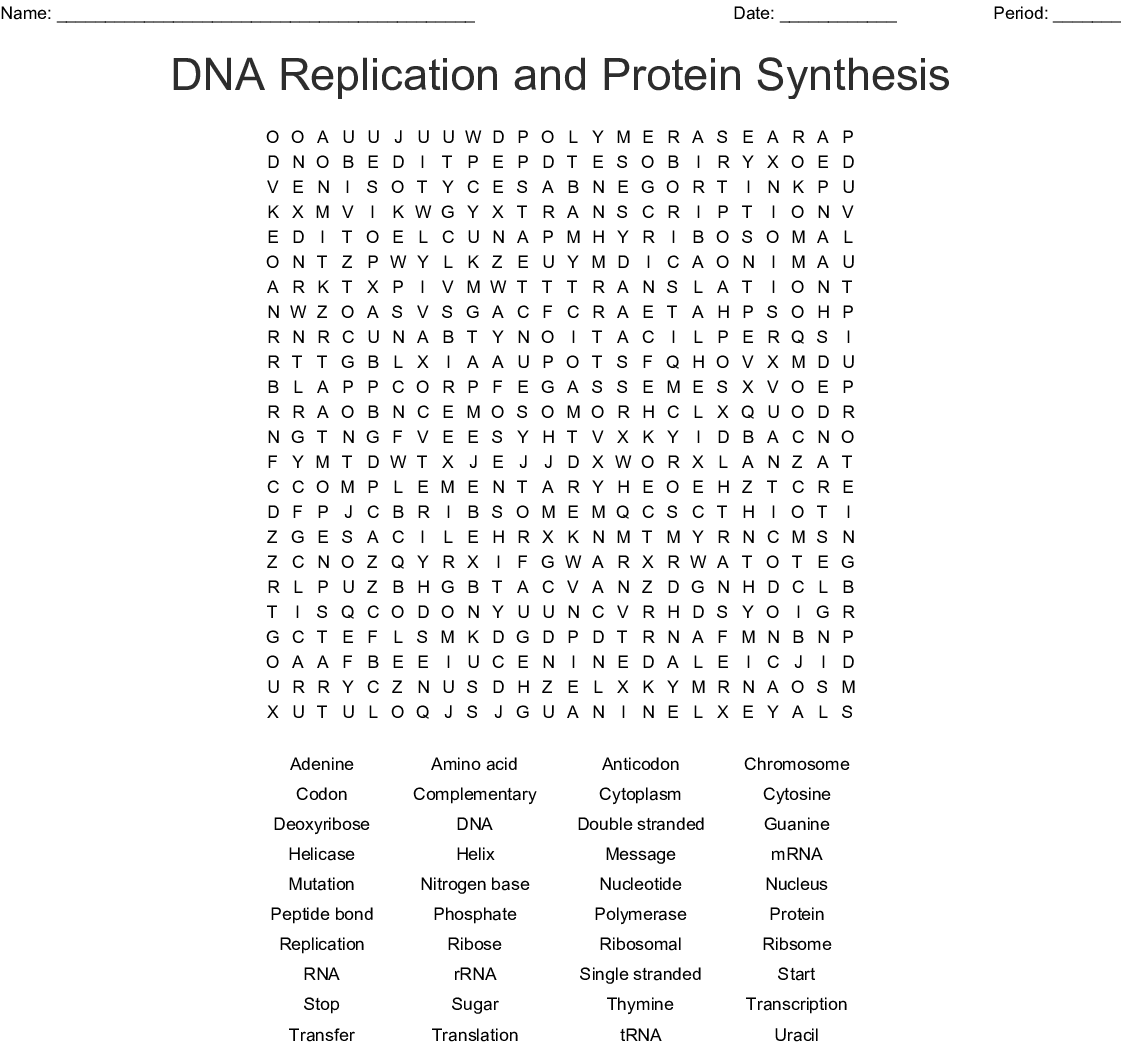 DNA Replication and Protein Synthesis Word Search - WordMint