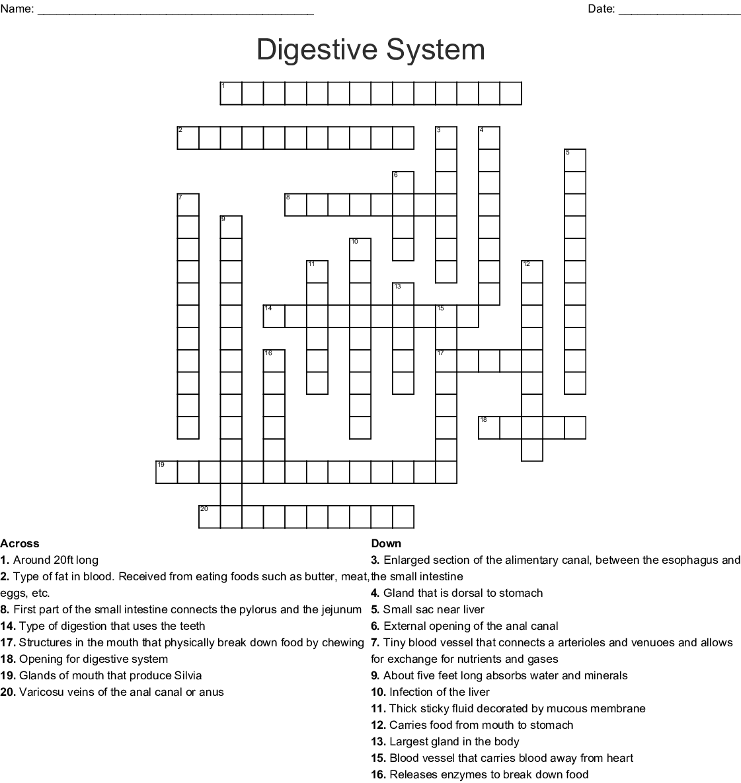 Human Digestive System Crossword Wordmint
