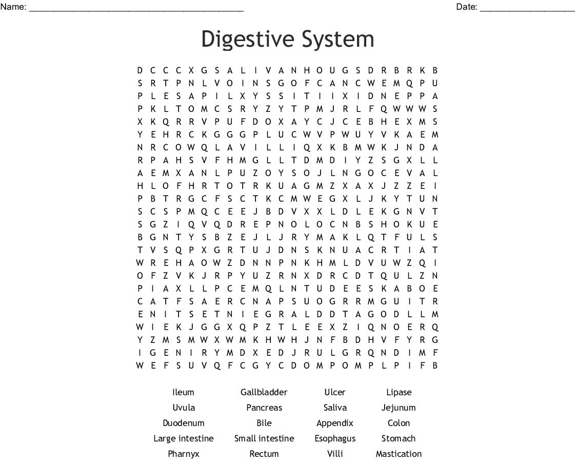 image regarding Digestive System Printable named The Digestive Procedure Term Seem - WordMint