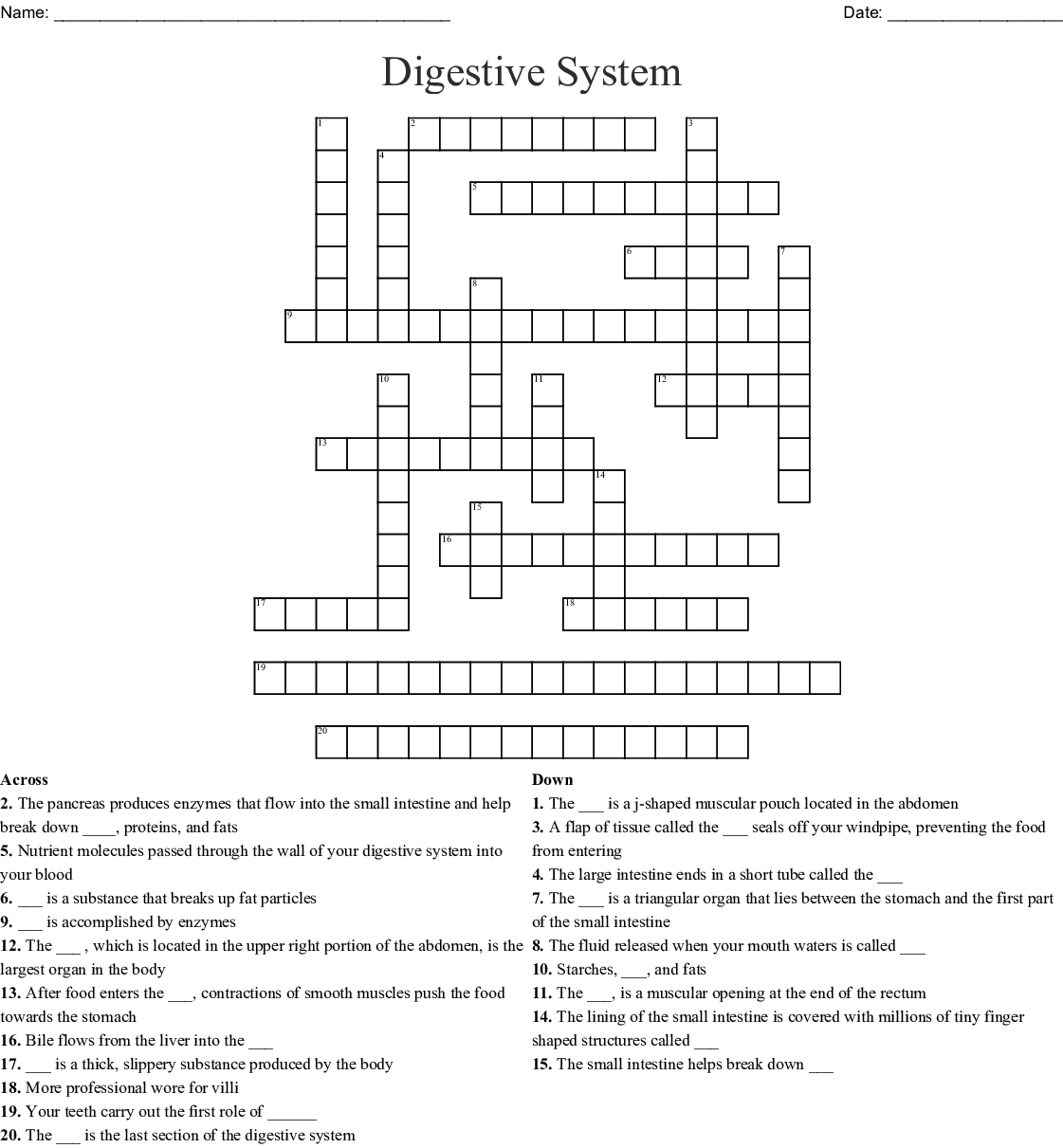 Functions In The Human Digestive System Worksheet Edplace