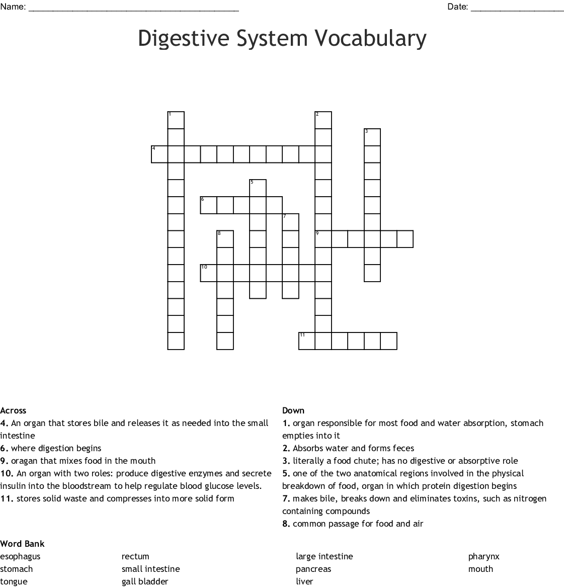 Digestive System Vocabulary Crossword Wordmint