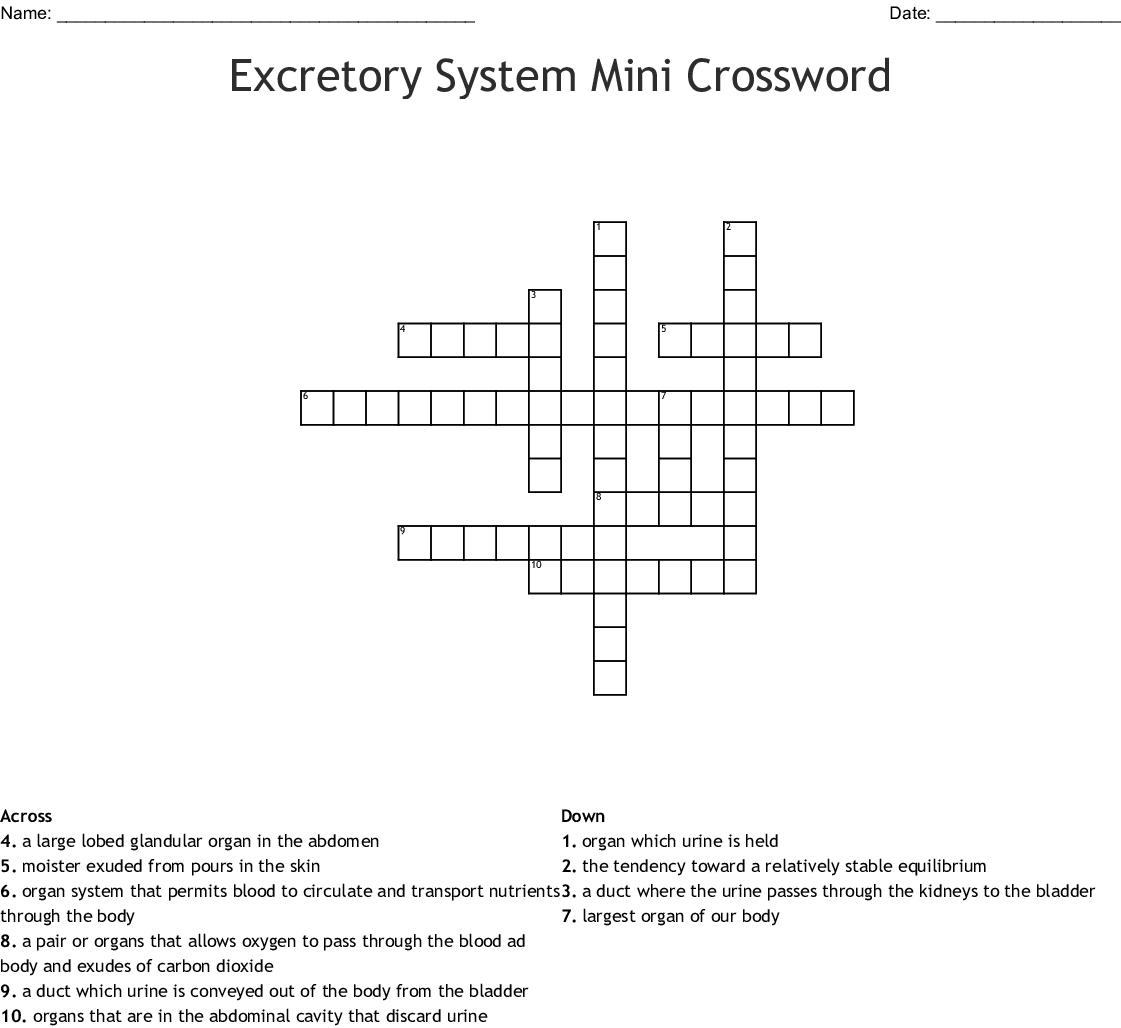 Excretory System Mini Crossword Wordmint