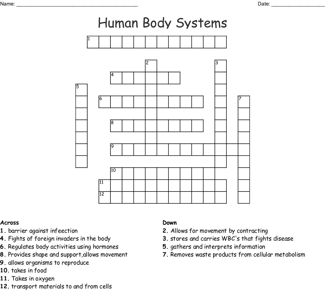 Systems Of The Human Body Word Search - WordMint