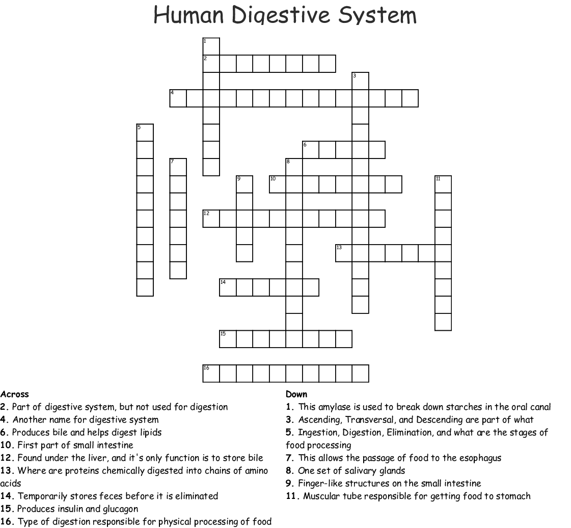 Human Digestive System Crossword - WordMint