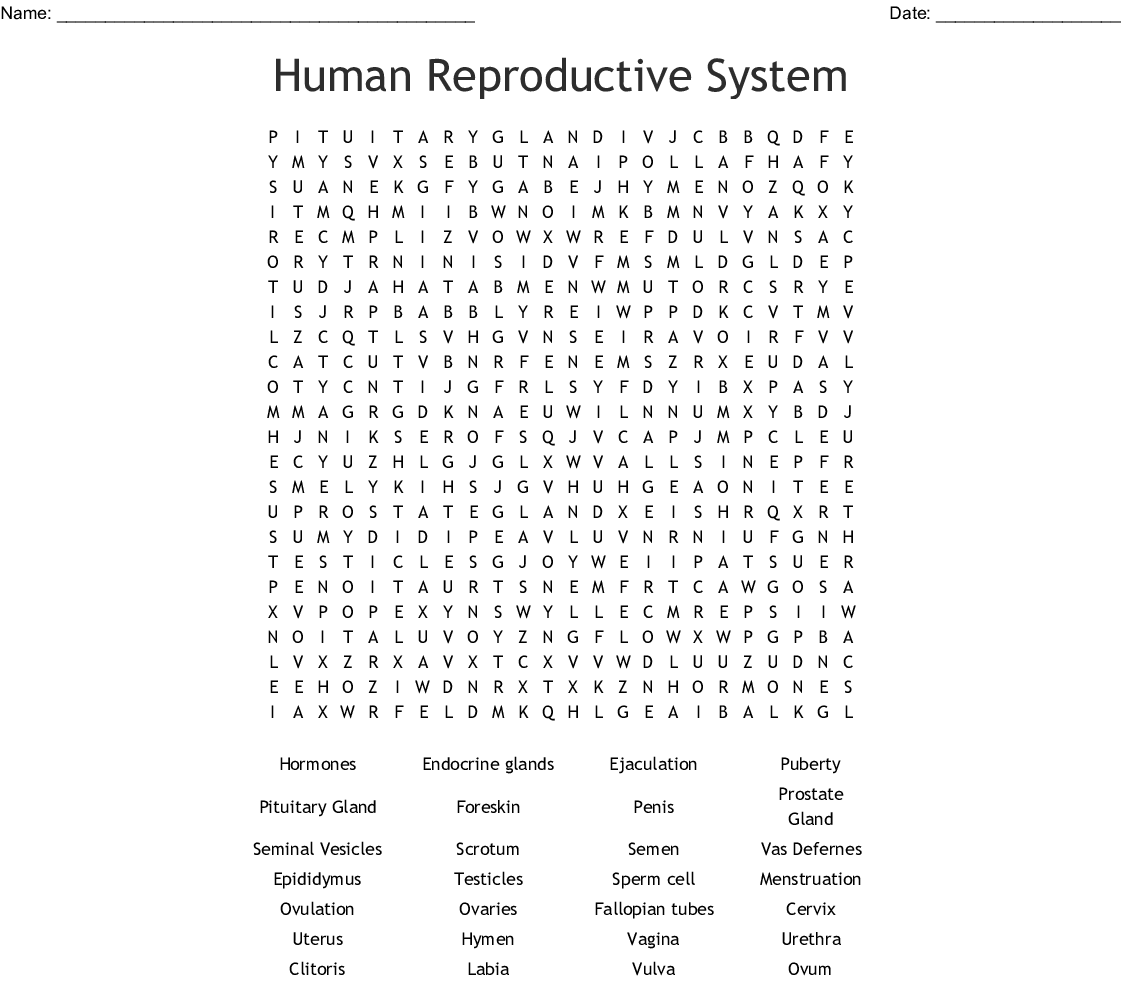 Human Reproductive System Word Search Wordmint