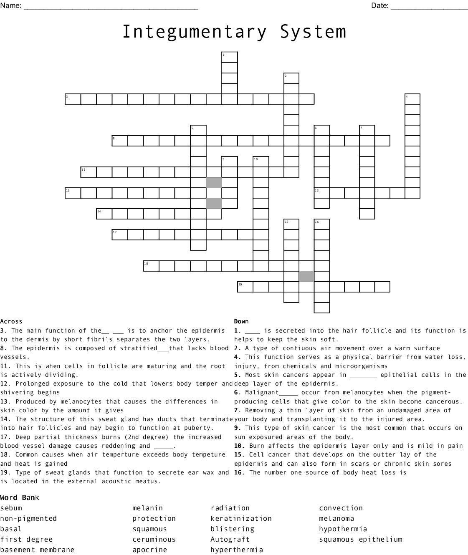 Integumentary System Crossword - WordMint