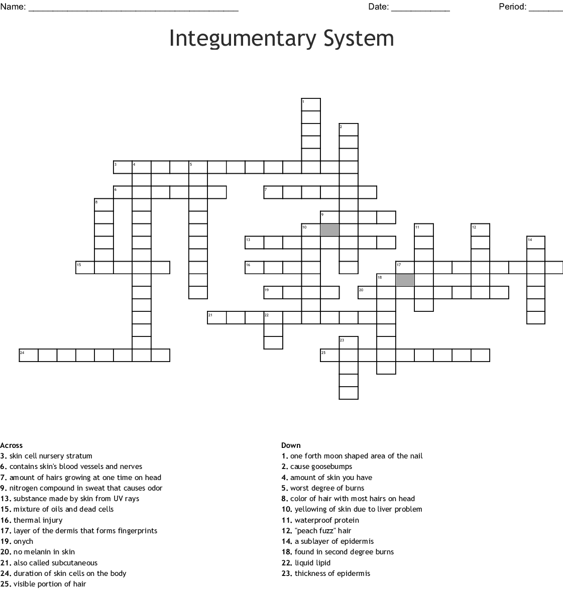 Integumentary System Crossword - WordMint