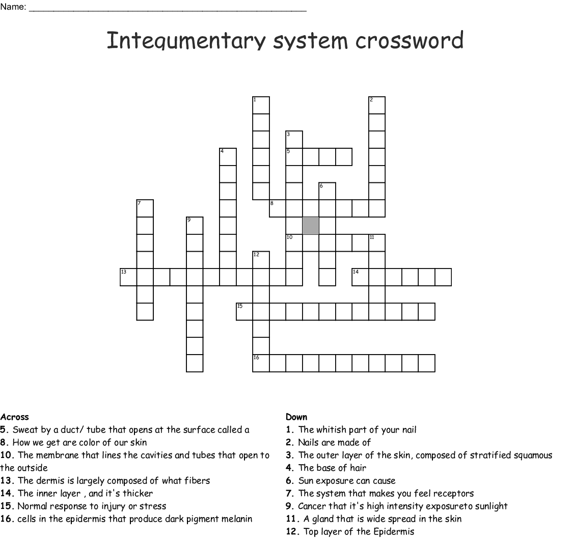 The Integumentary System Crossword - WordMint