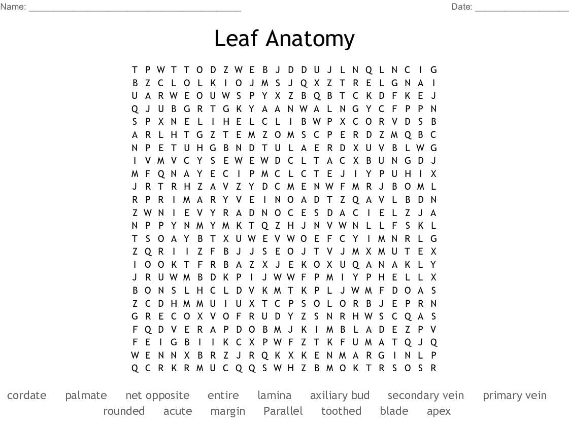 Leaf Anatomy Word Search - WordMint