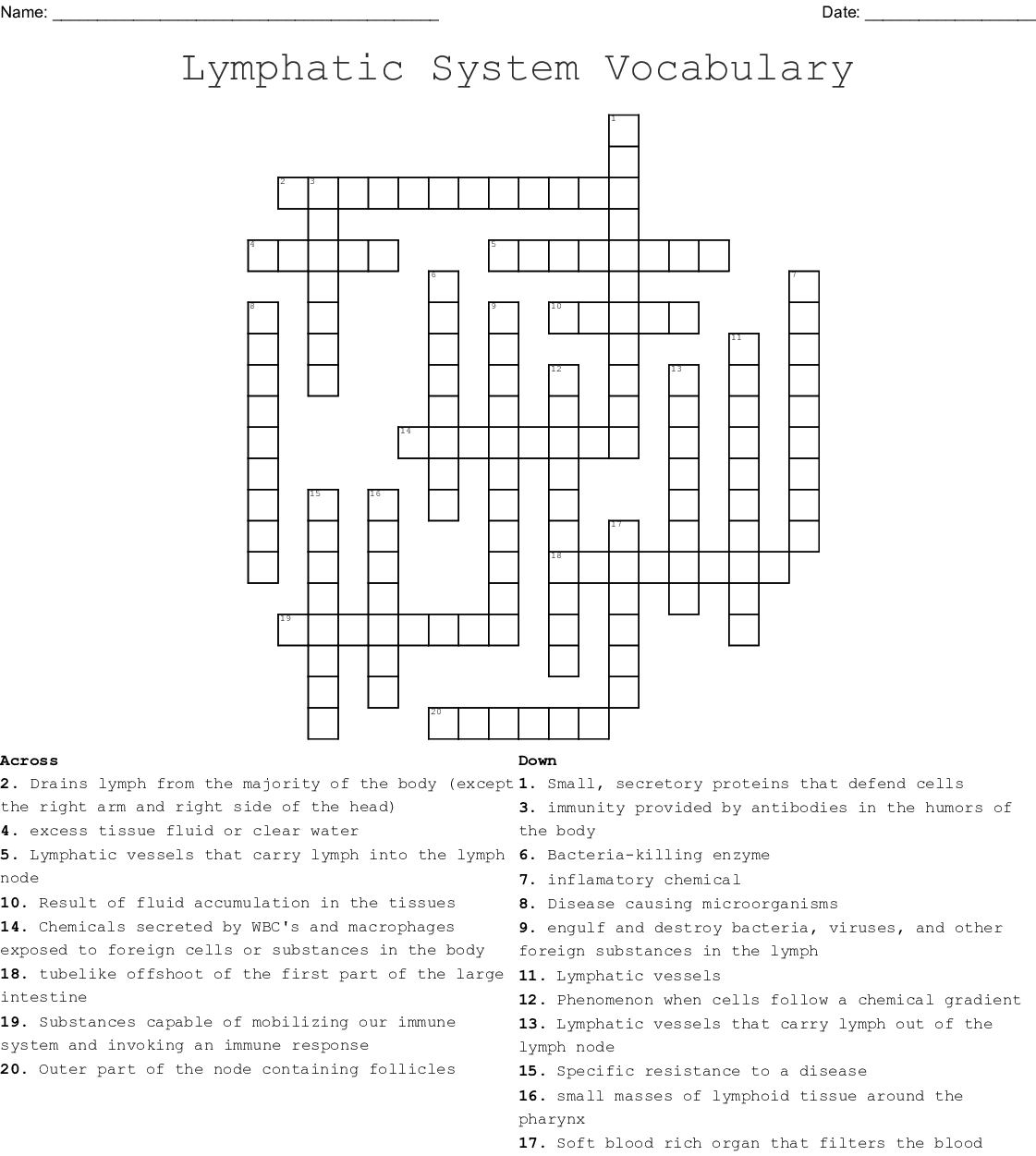 Lymphatic System Vocabulary Crossword Wordmint