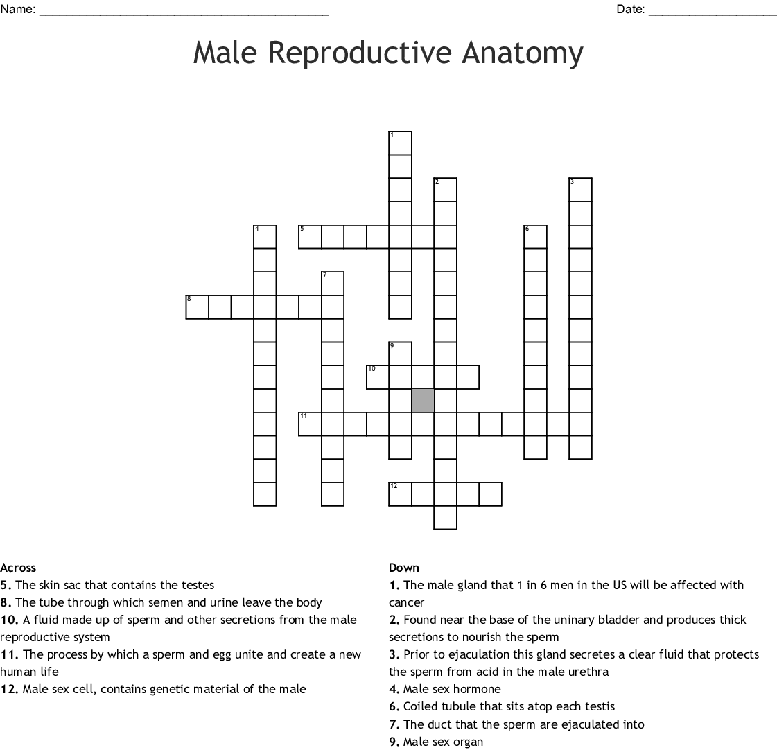 Male Reproductive Anatomy Crossword Wordmint