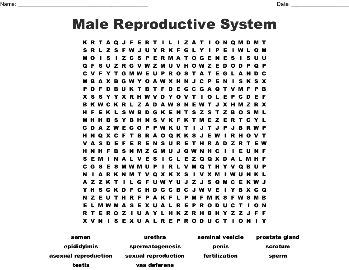 Male Reproductive System Word Search Wordmint