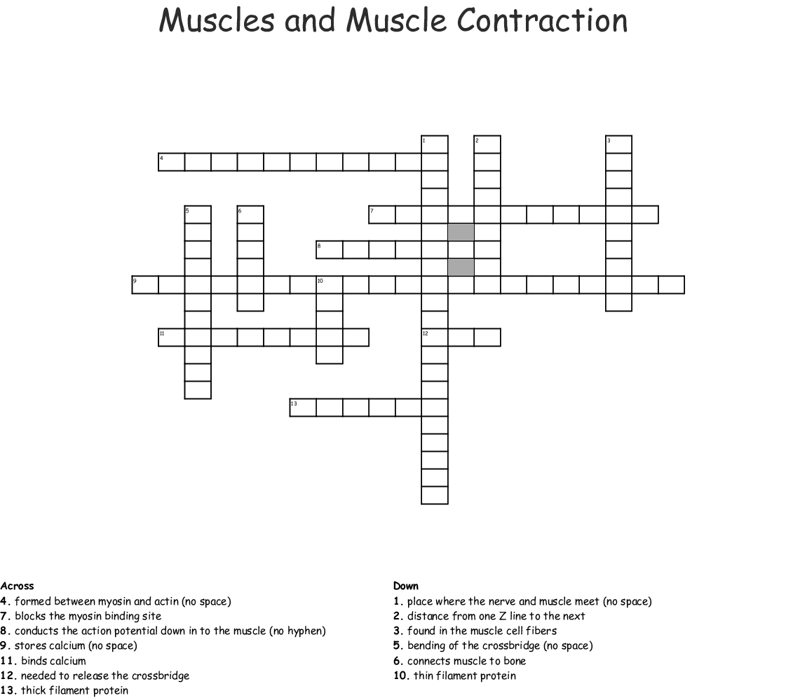 Muscles And Muscle Contraction Crossword Wordmint