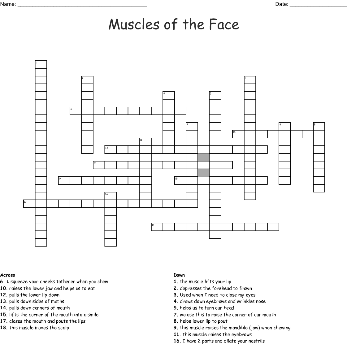Muscles Of The Face Crossword Wordmint