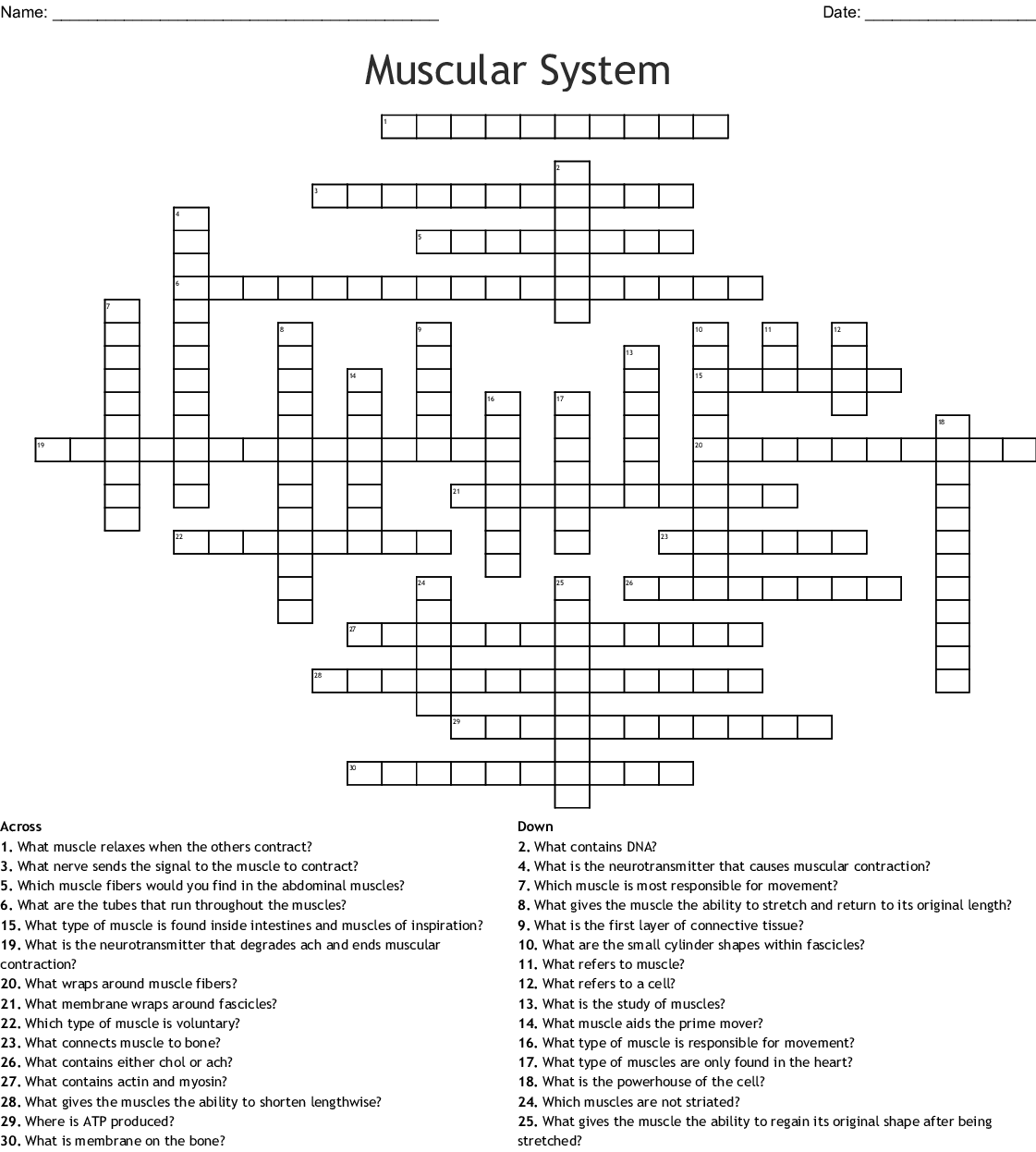 Crossword Puzzle Answer Key Skeletal And Muscular System ...