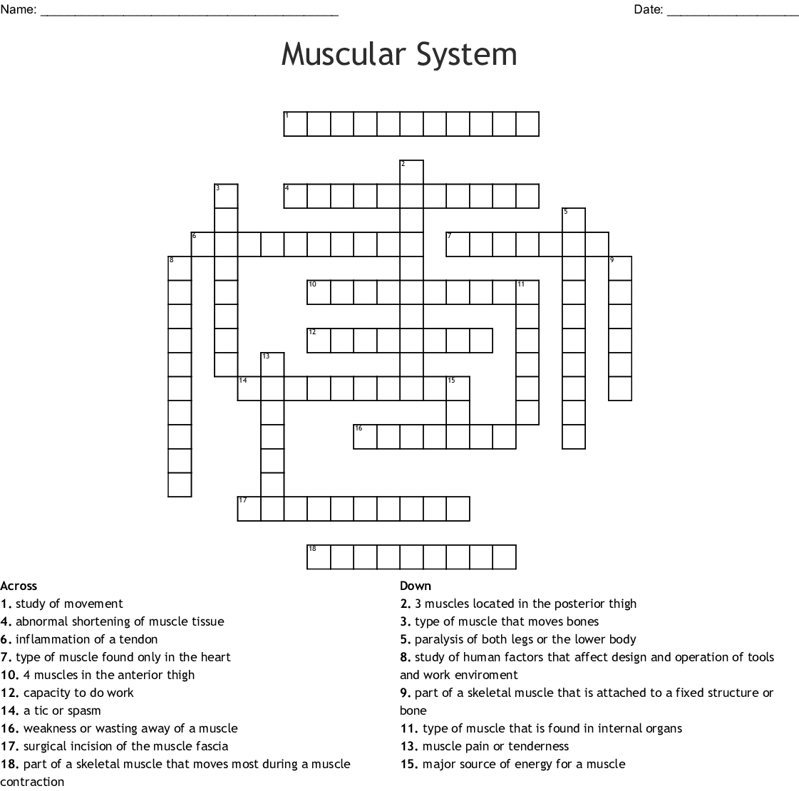Muscular System Crossword Wordmint