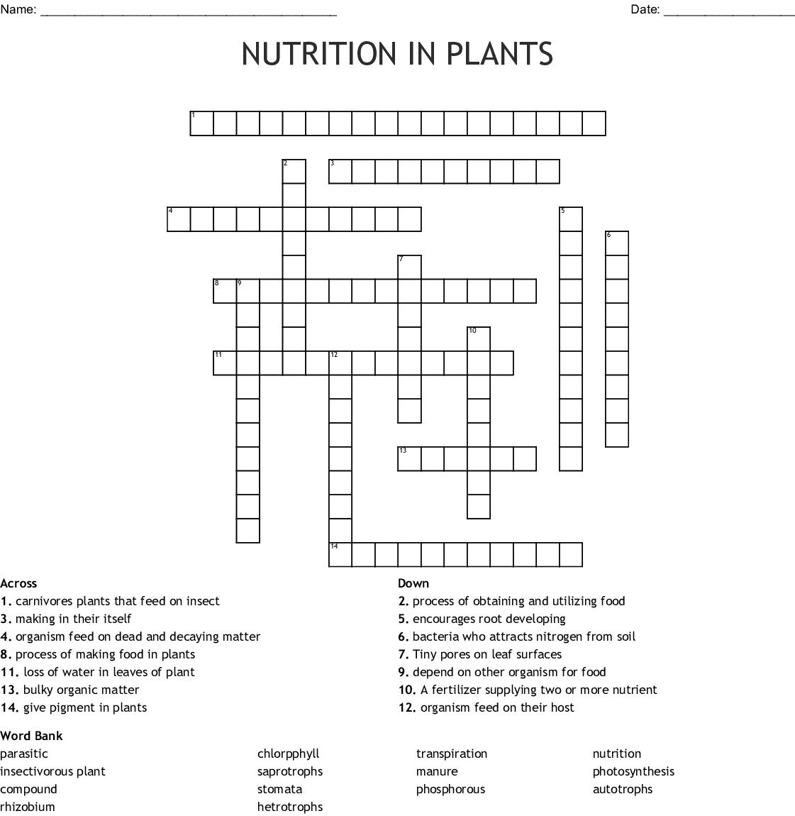 Plant Nutrition Crossword Wordmint