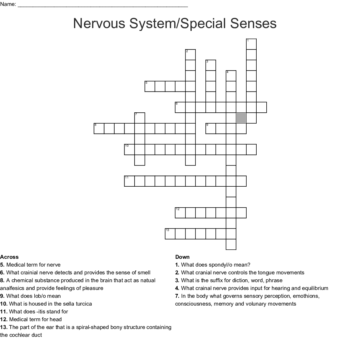 Nervous System Crossword Puzzle Answers Key | printable ...