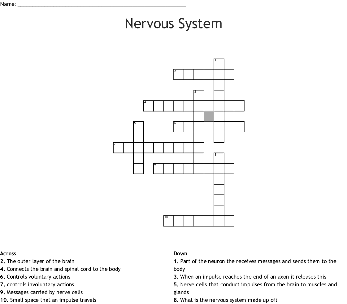 Nervous System Crossword - WordMint