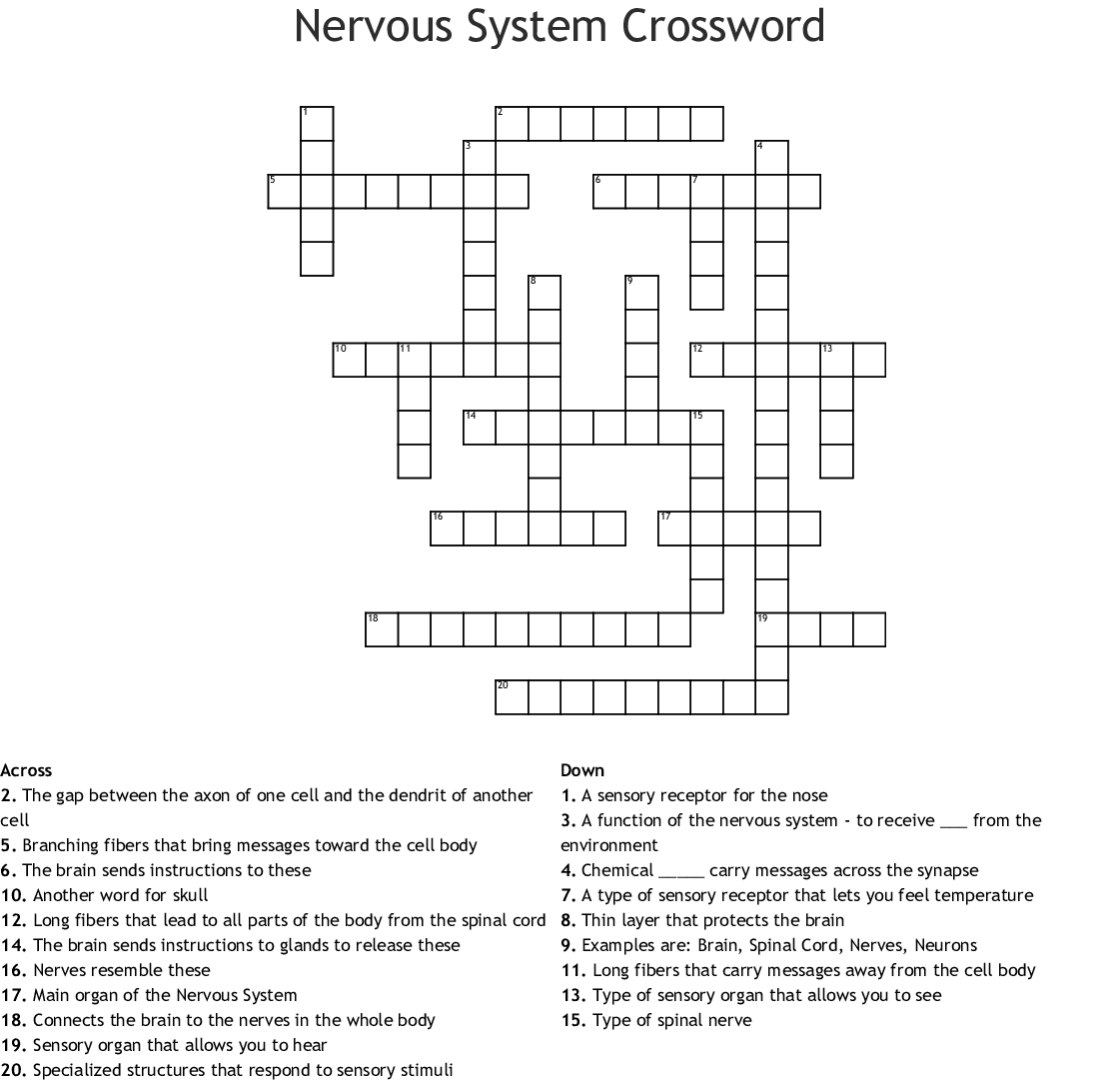 Biology Nervous System Crossword - WordMint