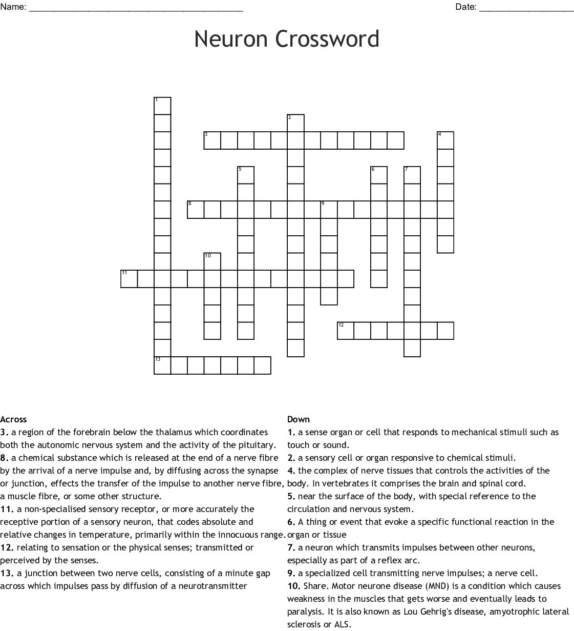 Cranial Nerves Crossword - WordMint