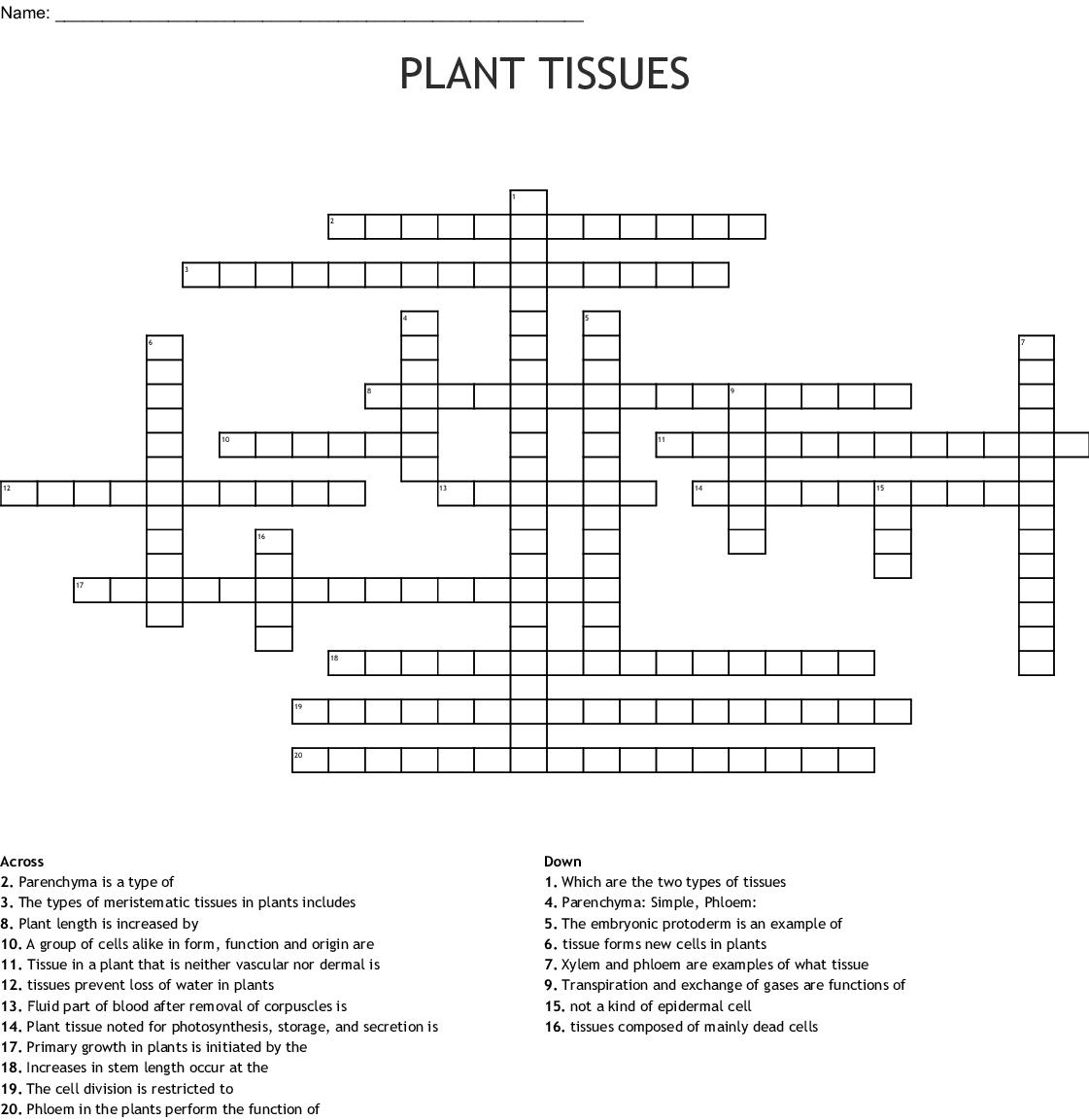 Plant Transport Transpiration Crossword Wordmint
