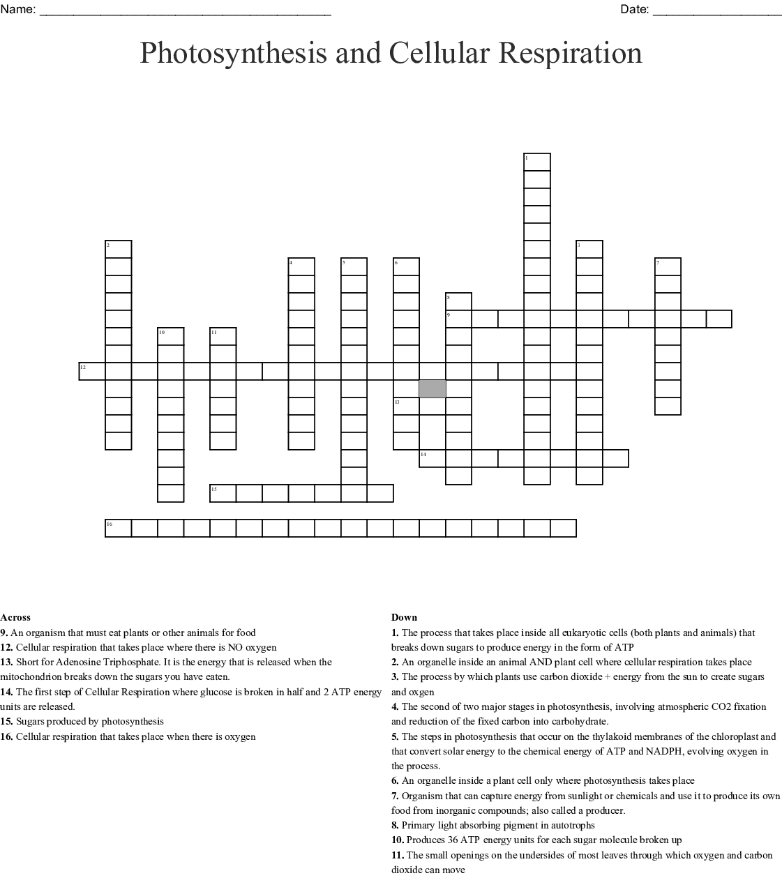Photosynthesis And Cellular Respiration Crossword Wordmint
