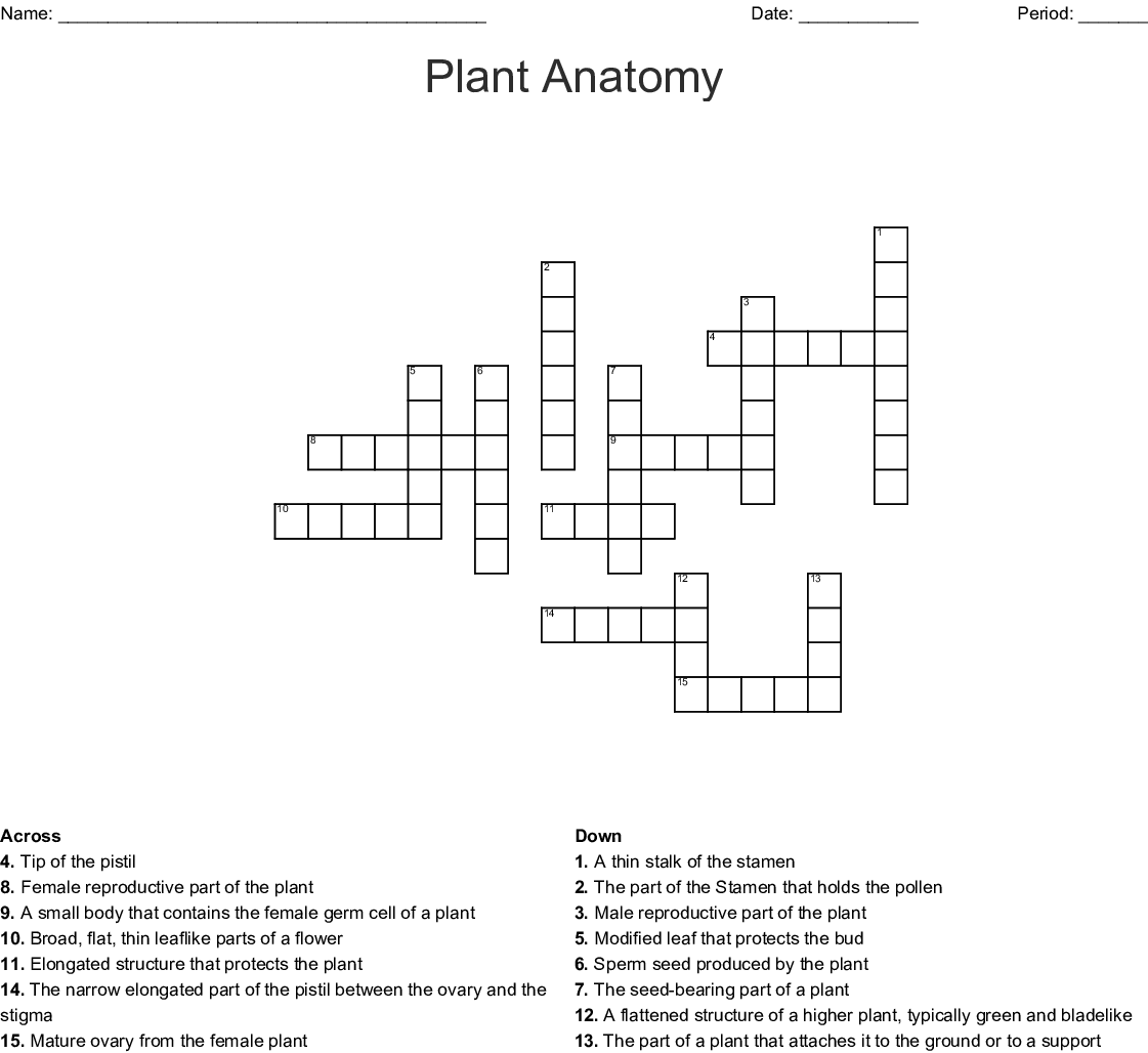 Plant Anatomy Crossword Wordmint