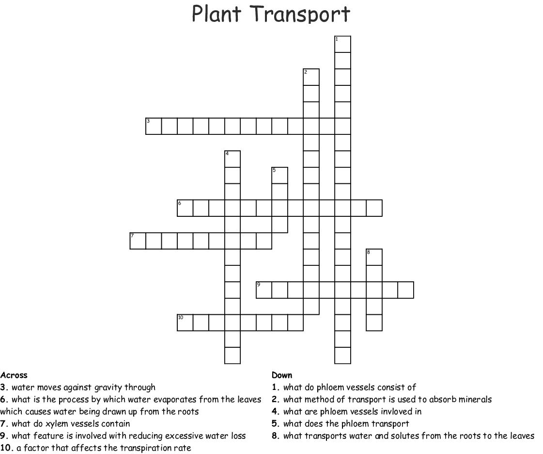 Plant Transport Crossword Wordmint