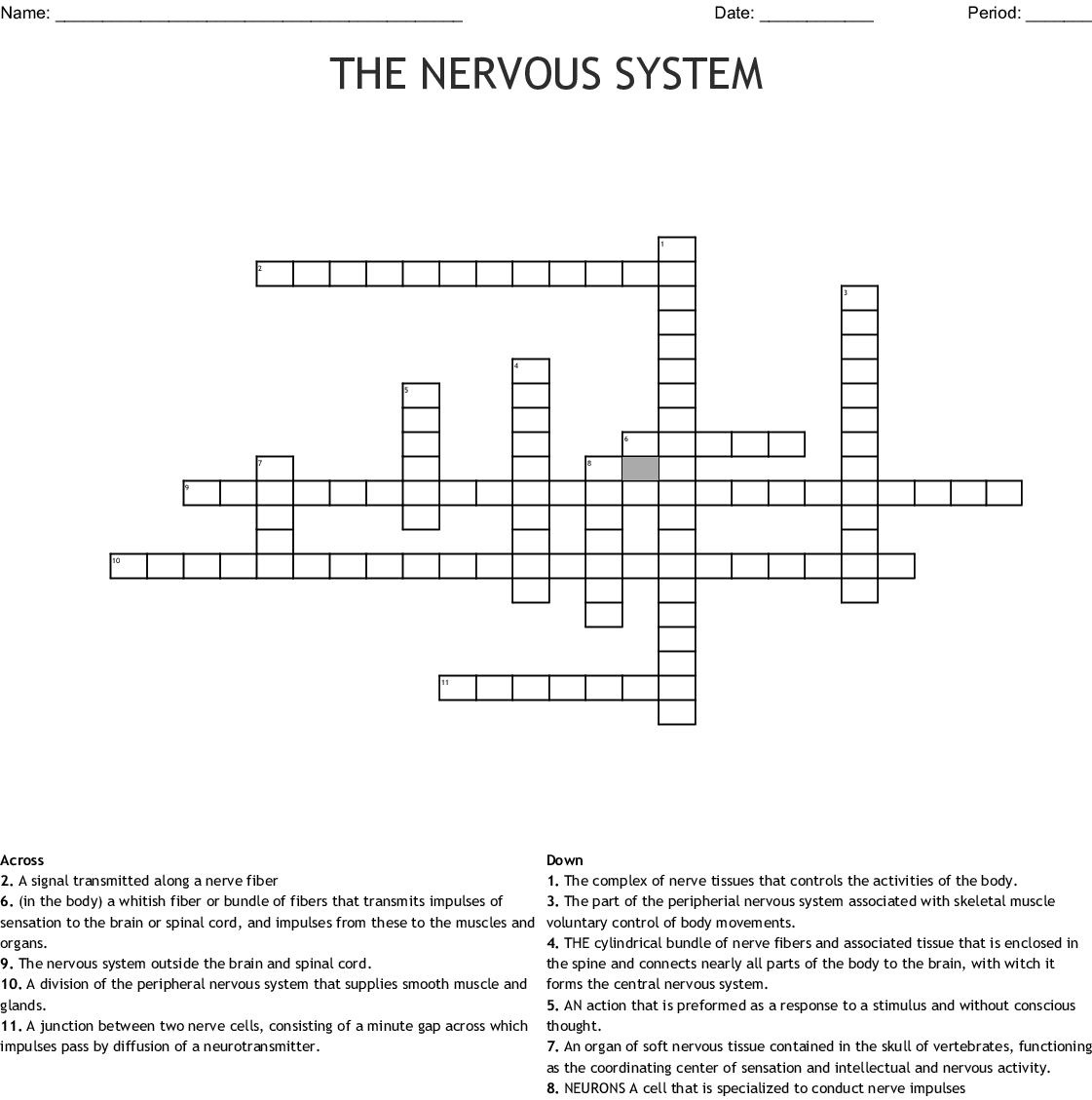 The nervous system Crossword - WordMint