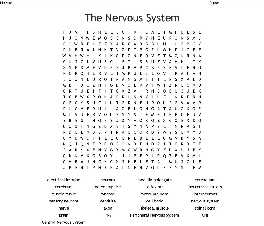 Anatomy: The Nervous System Crossword - WordMint
