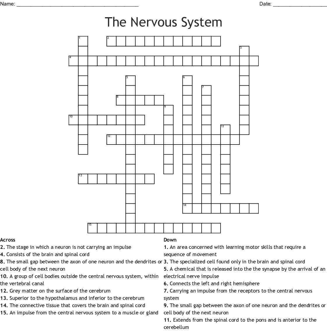 The Nervous System Word Search - WordMint