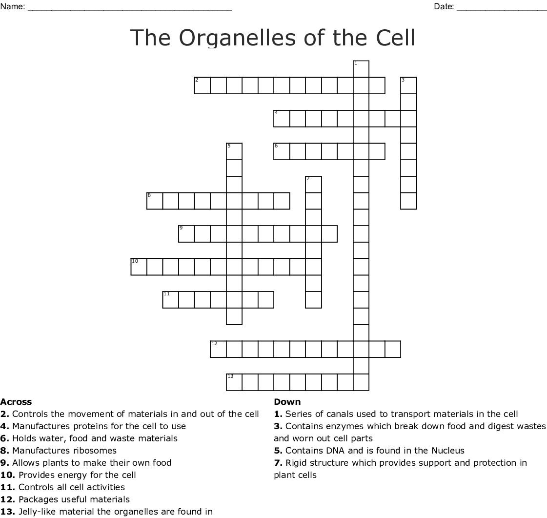 Cell Organelles: Structure and Function Crossword Puzzle ...