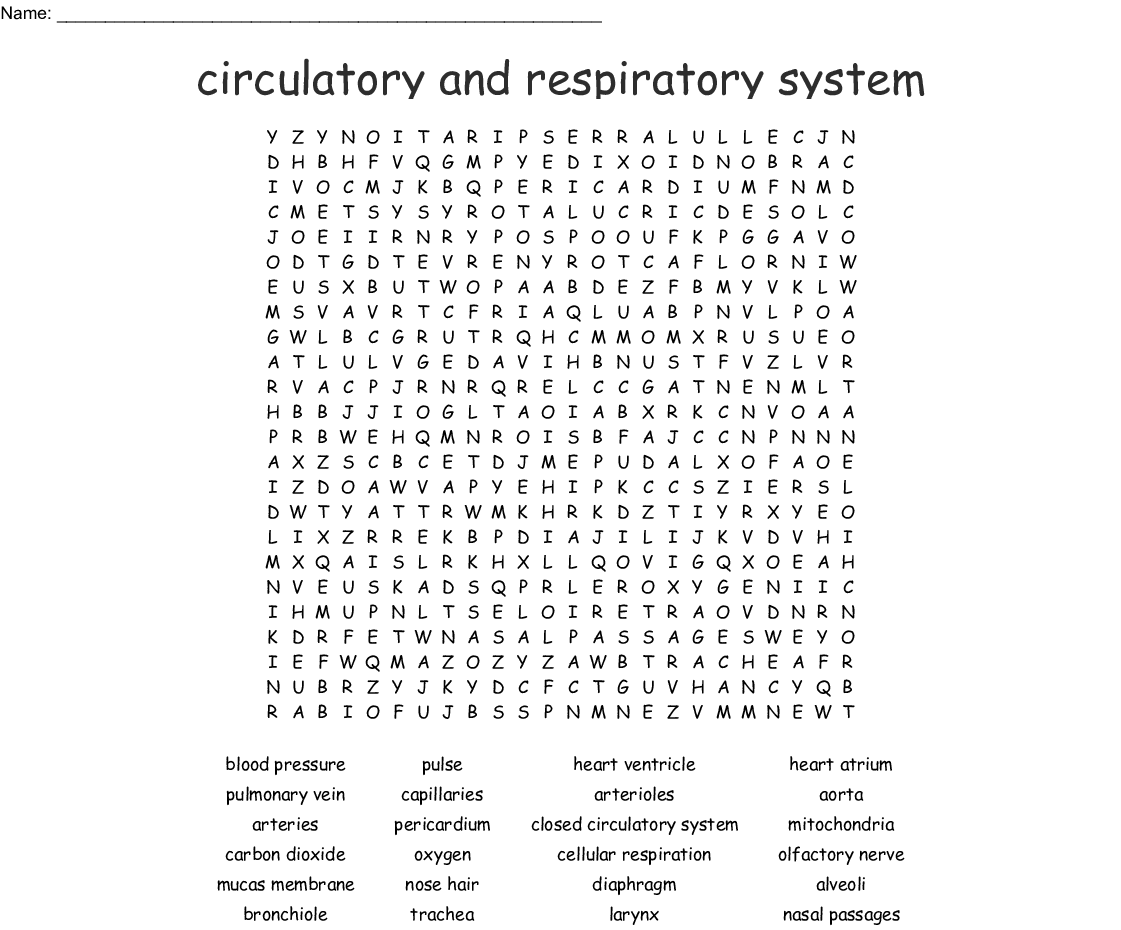 Circulatory And Respiratory System Word Search Wordmint